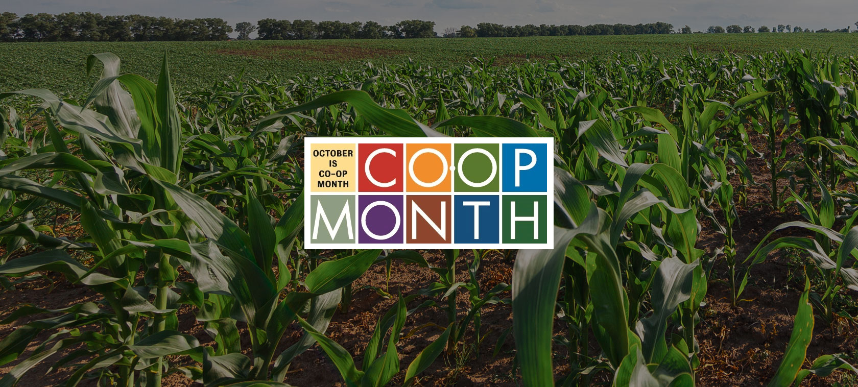 October is Co-op Month - NIC